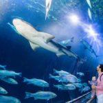 aquariumbay-gallery-shark